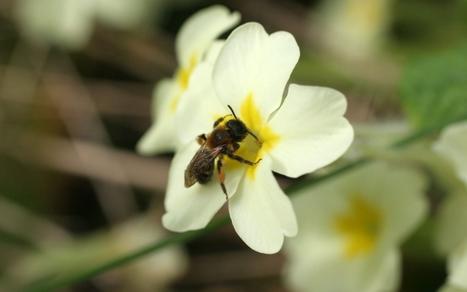 Abeilles : inquiétude après l'autorisation de deux nouveaux pesticides