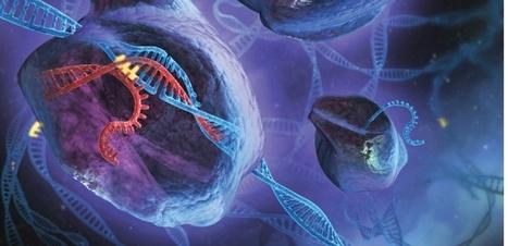 Après l'ADN, CRISPR permet aussi de modifier l'ARN