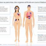 Bientôt des organes artificiels pour tout le corps humain ?