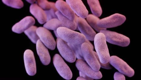 Ce qu'il faut savoir sur les «super-bactéries» qui affolent les Etats-Unis
