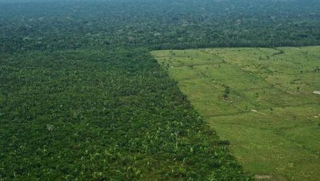 «Reforestation» dans l'ensemble du site