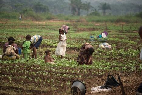 Changement climatique : les OGM peuvent-ils aider les pays en développement ?