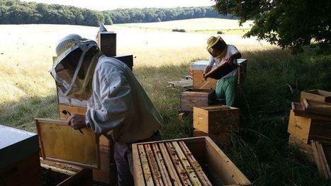 Comment la France perd ses abeilles (et leur miel)