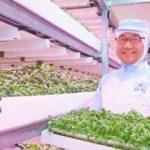 Comment produire 12000 laitues par jour sans pesticides ? Réponse dans ces serres au Japon.
