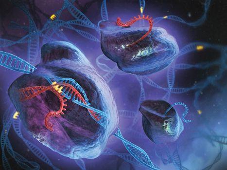 CRISPR/Cas9 : découverte d'une protéine qui bloque les mutations indésirables