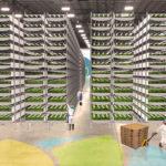 Dans le New Jersey, cette ferme urbaine produira bientôt 900 tonnes de nourriture