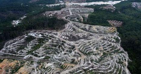 Déforestation : l'Indonésie a fait pire que le Brésil