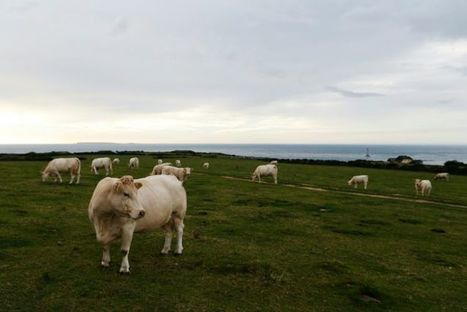 Des agriculteurs tiraillés entre souci de productivité et respect de l'écologie