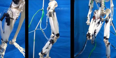 Des japonais donnent vie à un robot avec des muscles artificiels