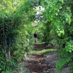 Des «mini-forêts» à forts impacts