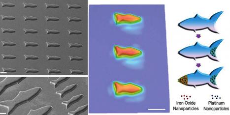 D'incroyables micro-poissons capables de nager dans vos veines – Sciencesetavenir.fr