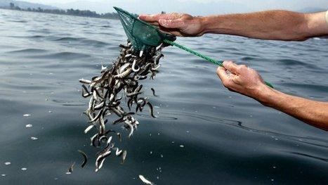 Du mercure marin retrouvé dans les lacs de montagne pyrénéens selon le CNRS