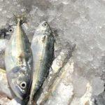 Entrée en vigueur du premier traité mondial contraignant visant à lutter contre la pêche illégale
