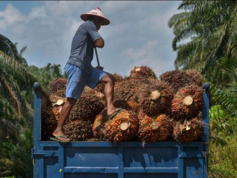 Envers et contre tous, Total lance sa bioraffinerie à l'huile de palme