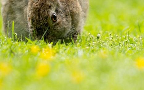 Espèces menacées : adieu vison, lapin et campagnol