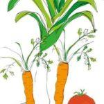 Et si on cultivait des semences tombées dans le domaine public ou sous licence «open source»?