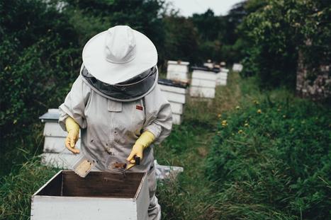 Extinction des abeilles : 310 ruches supprimées sur 480 cet hiver