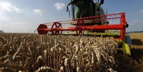 FAO : les prix alimentaires mondiaux au plus bas depuis 2009