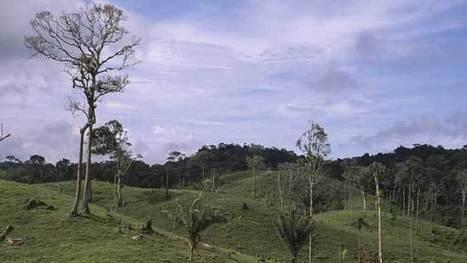 Finance verte : investir son épargne dans la forêt