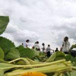 Foix : un opposant aux OGM devant le tribunal pour refus de prélèvement d'ADN