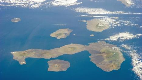 Galapagos: lourdes condamnations pour des pêcheurs chinois illégaux