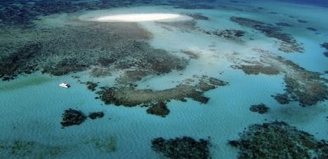 Grande Barrière de corail : la mine géante du groupe Adani devrait voir le jour