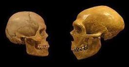 Hommes et femmes : égales devant l'évolution ?