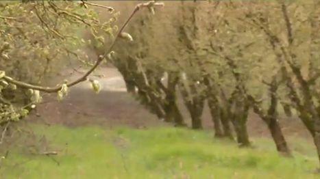 Il anticipe le changement climatique en plantant des arbres des pays chauds