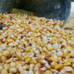 La France durcit le ton sur les OGM
