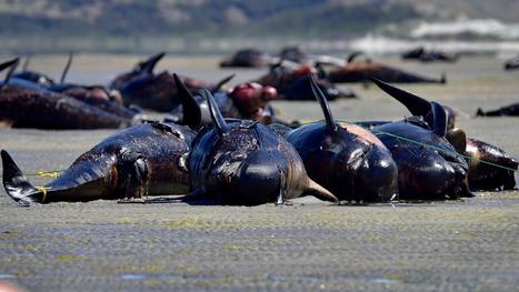 La sixième extinction animale de masse est en cours