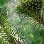La soie d'araignée ne flanche jamais. Et voici pourquoi