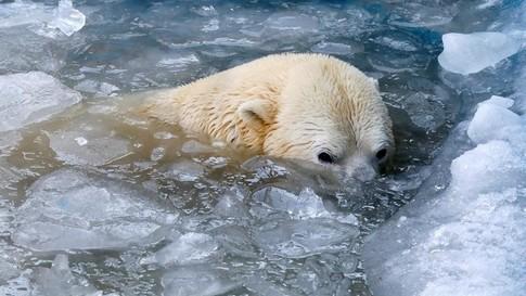 La Terre se réchauffe trop vite pour que les animaux s'adaptent