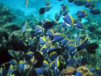 La vie océanique au bord d'une extinction de masse ?