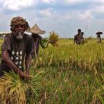 L'agriculture biologique peut-elle nourrir le monde ? Oui, mais…