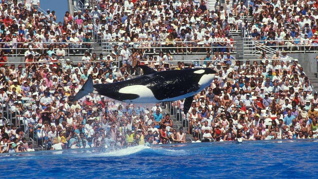 Le Canada ouvre un sanctuaire pour les baleines sauvées de la captivité