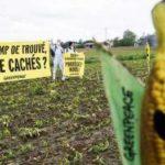 Le Conseil d'État annule l'arrêté interdisant le maïs transgénique MON810