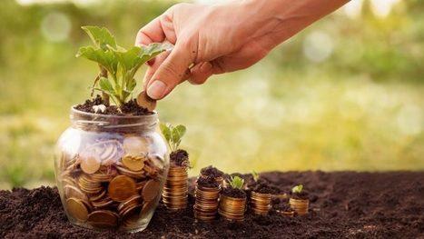 Le crowdfunding part à la campagne avec Miimosa, Agrilend et Blues Bees