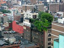 Le gouvernement supporte la toiture végétalisée