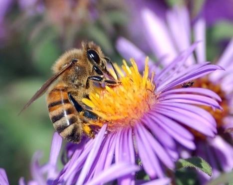 Le Parlement des enfants banit les pesticides et vote pour une autoroute des abeilles