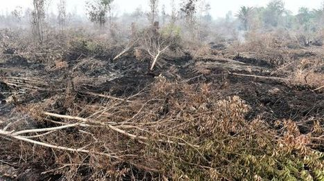 Le Parlement européen interdit l'huile de palme carburant