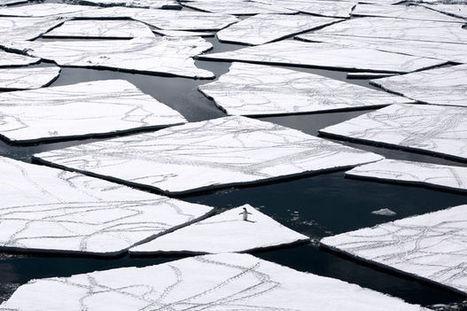 Le plus grand sanctuaire marin au monde verra le jour en Antarctique