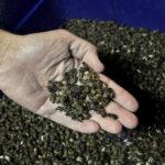 Le Royaume-Uni souhaite interdire tous les pesticides tueurs d'abeilles