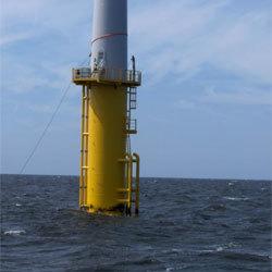 L'éolien offshore contribuerait à l'épanouissement de la vie marine