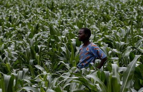 «Les agriculteurs africains peuvent nourrir le monde»