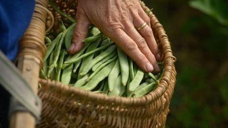 Les agriculteurs bio dénoncent un gouvernement qui promet beaucoup, mais aide peu