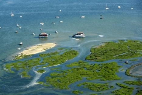 Les aires marines protégées en plein essor, leur gestion en question
