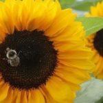 Les députés Les Républicains saisissent le Conseil constitutionnel sur la loi biodiversité