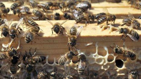 Les députés votent l'interdiction des pesticides tueurs d'abeilles, mais en 2018