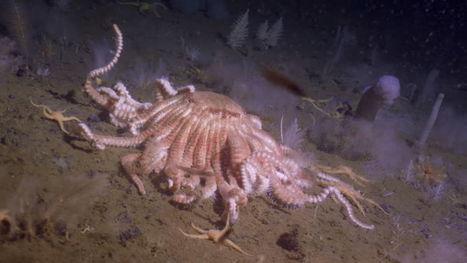 Les fonds marins de l'Antarctique grouillent de vie, même à 1000 mètres de profondeur