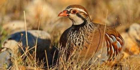 Les oiseaux disparaissent des campagnes françaises à une «vitesse vertigineuse»